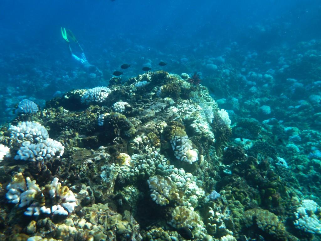 Korallen Molokini Island