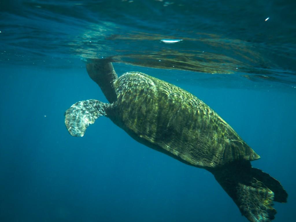 Turtle braucht Luft