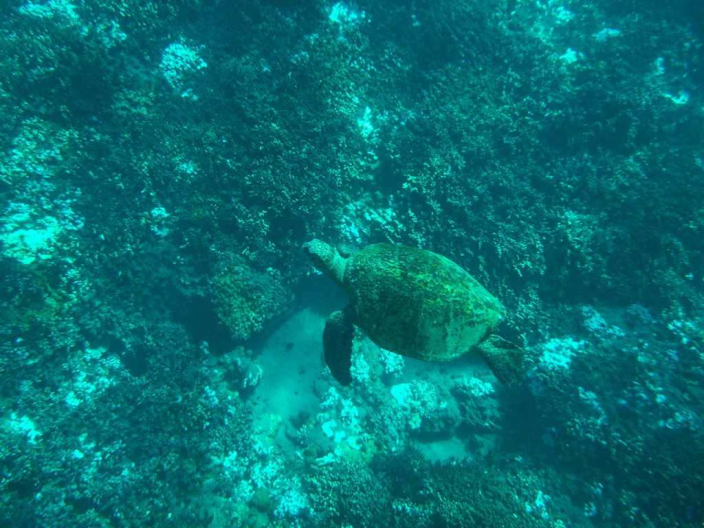 Turtle in Turtle Town